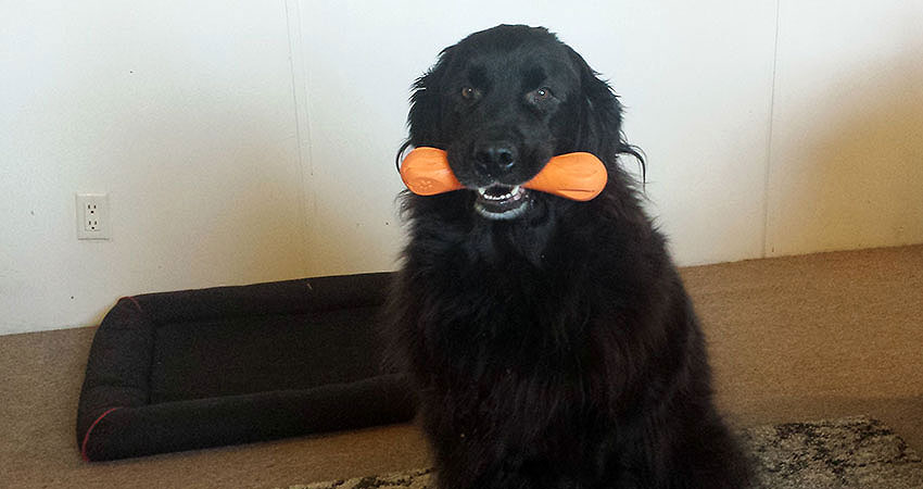 An Indestructible Chew Toy Even the Big Dogs Can't Conquer