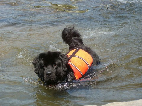 big-dog-life-jackets