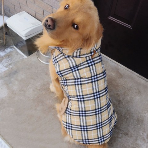 dog-jacket-tpyq-waterproof