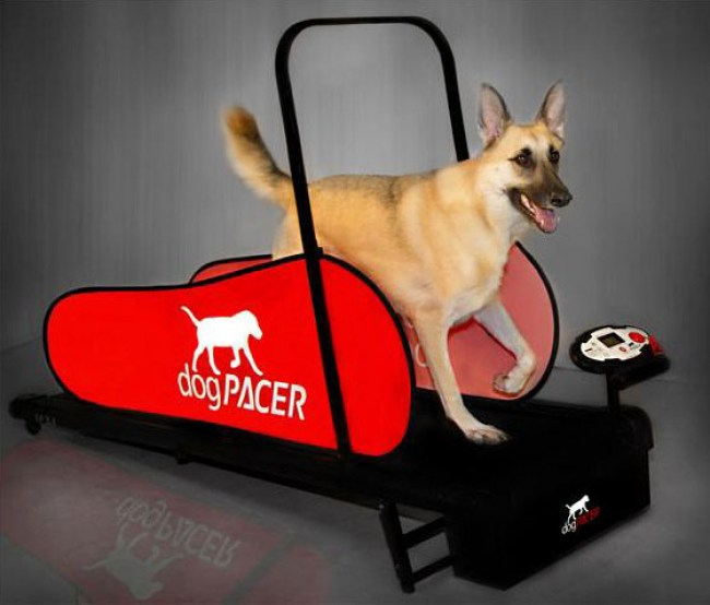 dogpacer-treadmill