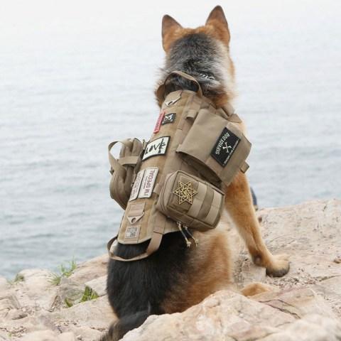 Dog Collars Amp Harnesses Coolpets Dog Harness Leash Collar